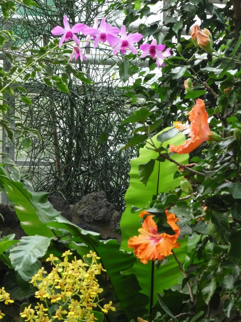 Fleurs au jardin des plantes de Francfort